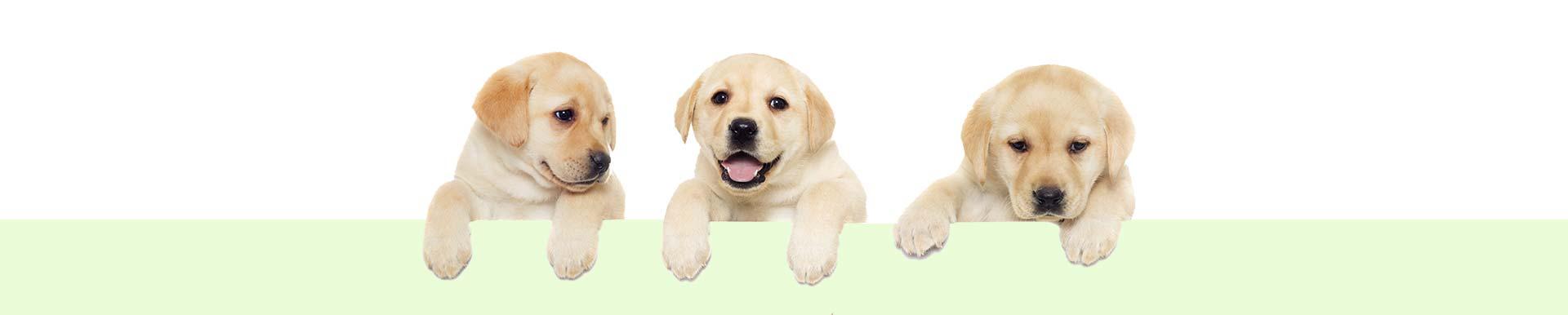 cta-dog